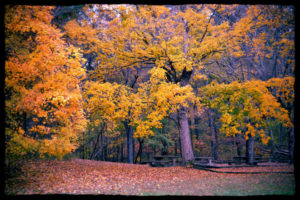 Fall at the South Bison Range picnic area, photo by Brian Truskey