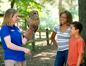 Meet our owls at Woodlands Nature Station!