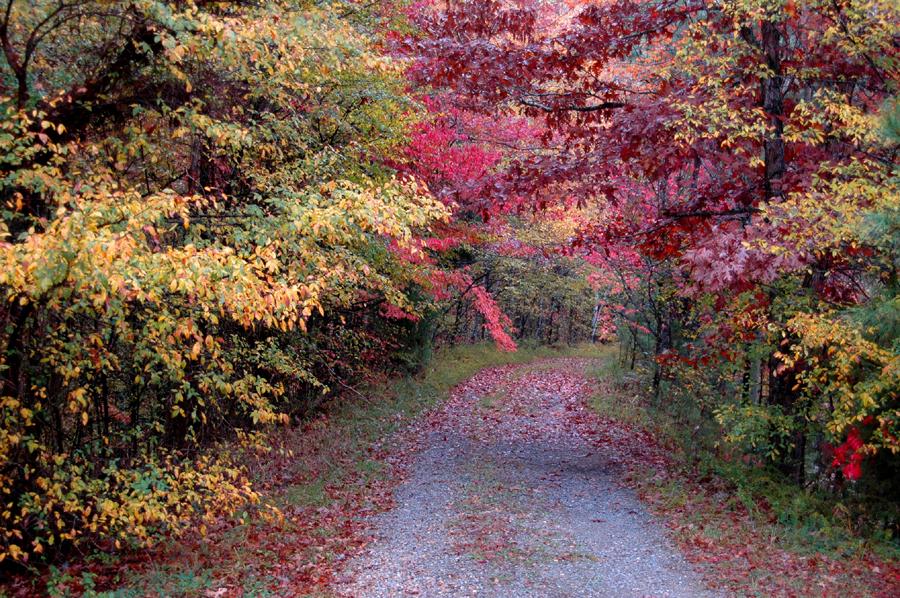 Cedar Pond Picnic Area