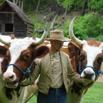 Jonathan with Oxen