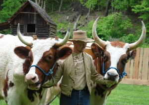 Oxen at the Homeplace 1850s Farm
