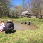 Kids love to watch the Black Cayuga ducks on the farm. Staff photo