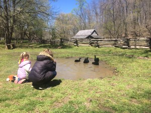 Kids love to watch the Black Cayuga ducks on the farm. Staff photo