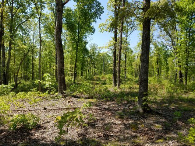 Prior Creek Oak Grassland Demonstration Area. Biologist heard Prairie warblers and Great-crested Flycatcher. Photo by Elizabeth Raikes