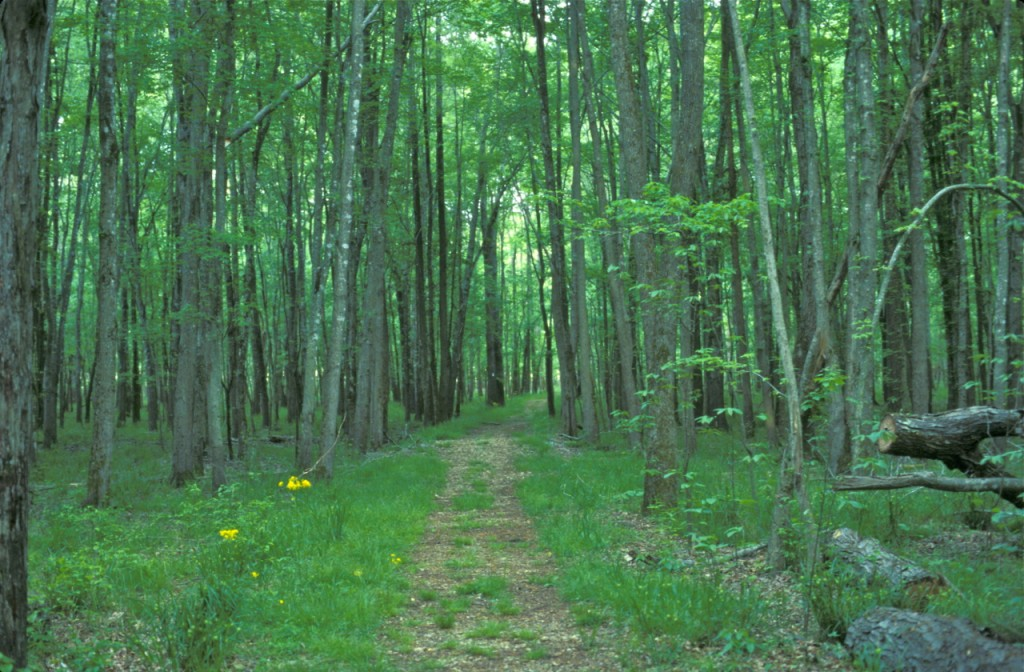Honker Trail