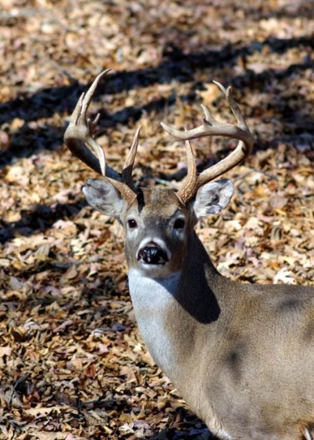New for Hunters-Deer Hunter Check-out Card at Land Between the Lakes