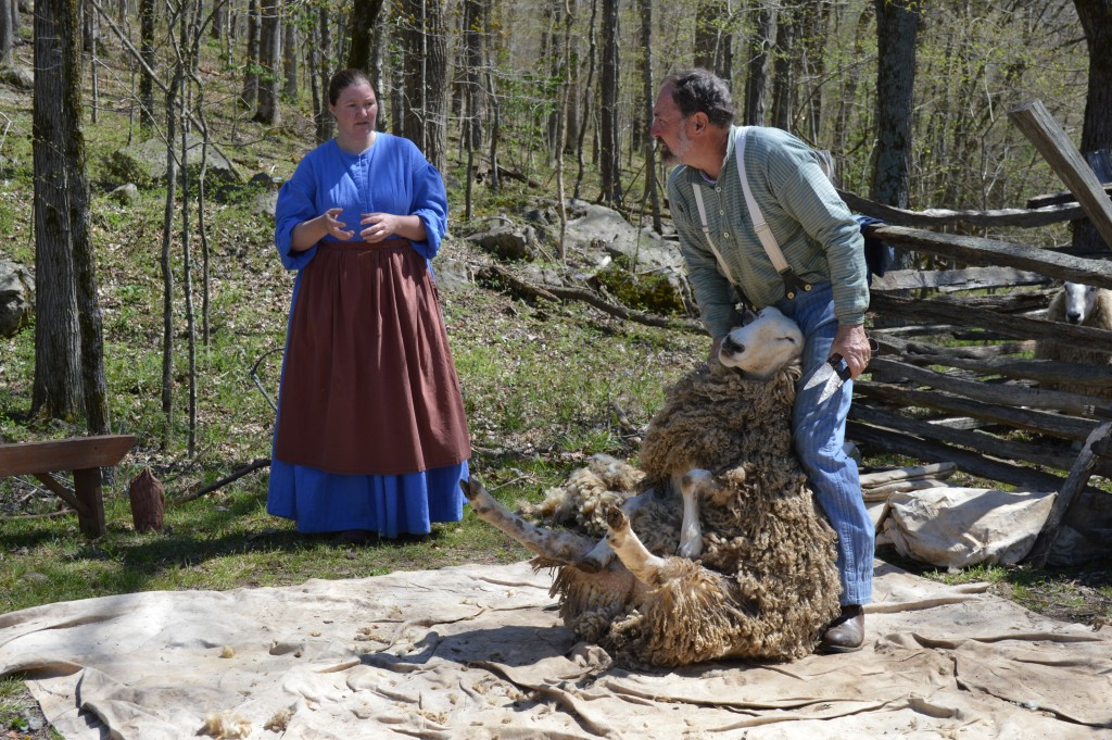 Sheep Shearing at 1850's Homeplace, Photo by Kelly Bennett