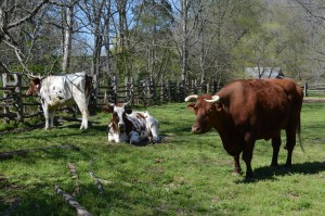 Visit Ozzie, Otis, and Red the Homeplace 1850s Farm, Photo by Kelly Bennett