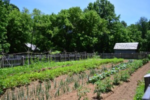 Summer garden at the Homeplace 1850's Working Farm and Living History Museum