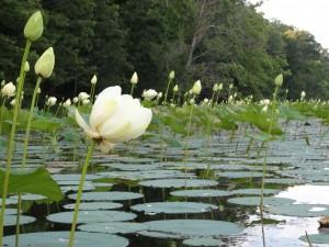 Canoeing on Honker Lake, Photo by Kelly Sellers