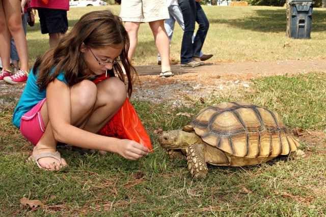 African Sulcata Tortoise. Photo provided by Natural History Educational Company of the Midsouth