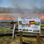 Prescribed Fire at the Homeplace m