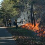 Firefighters light a prescribed burn