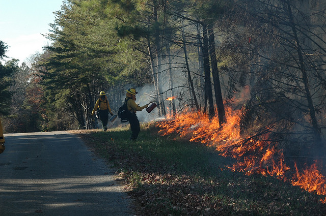 Firefighters light a prescribed burn
