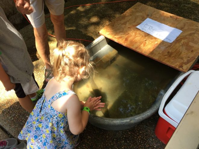 2016 Cool Critters Day at Nature Station