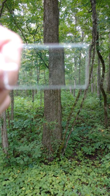 "Looking through a prism to tell if this tree is within the ""plot."" Photo by Yvonne Helton"