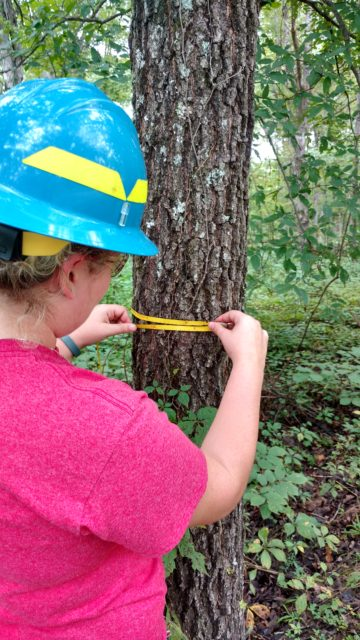 Forest Service staff measuring diameter at breast height of a tree. Photo by Yvonne Helton