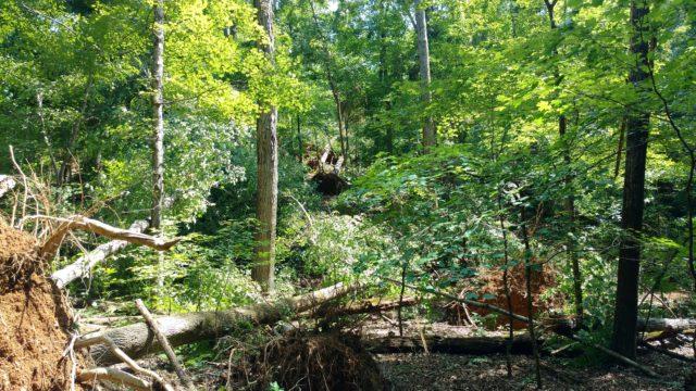 Forest Service Road 114, July 2016 storm damage