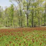 Crimson clover planting in Demumbers Creek